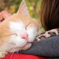 Come allungare la vita del tuo gatto
