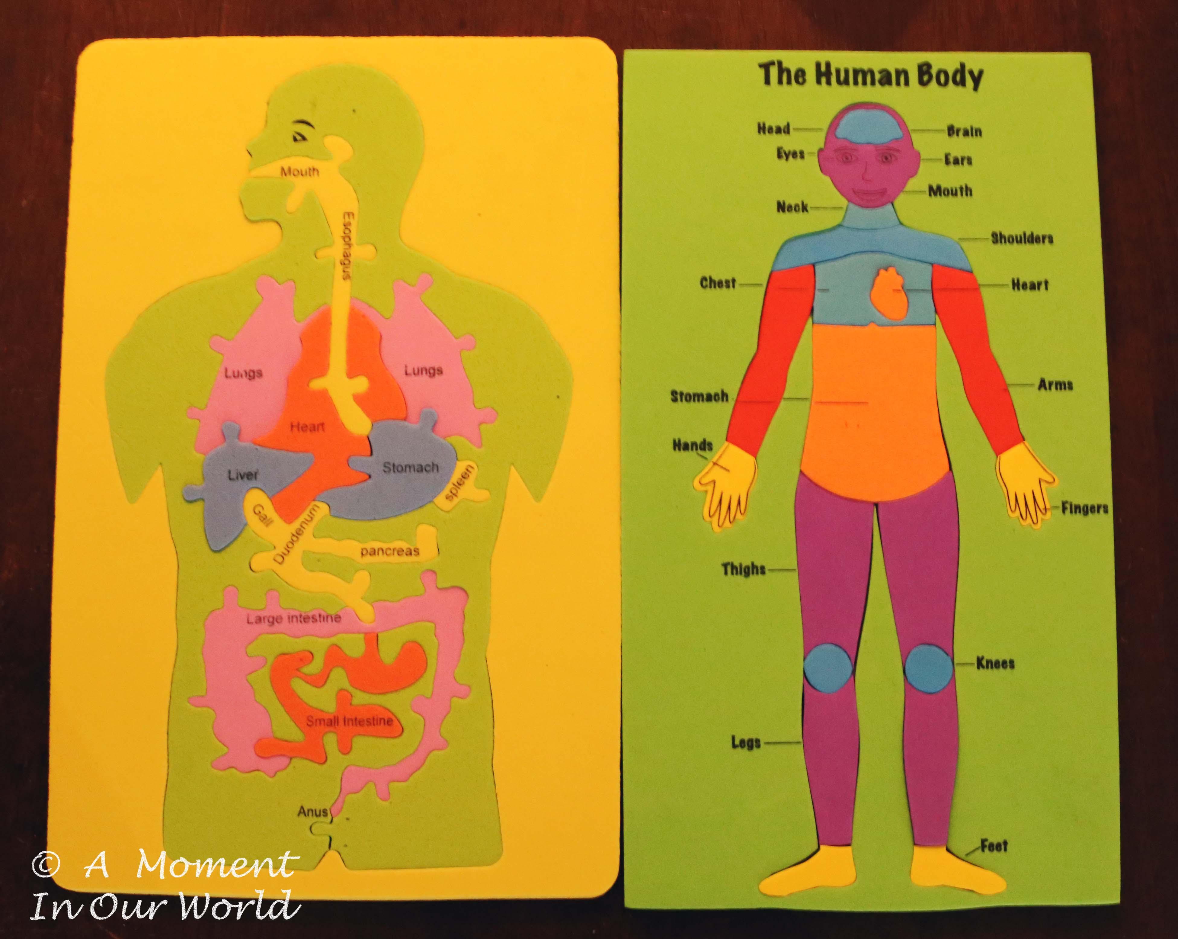 Human Body Body Parts