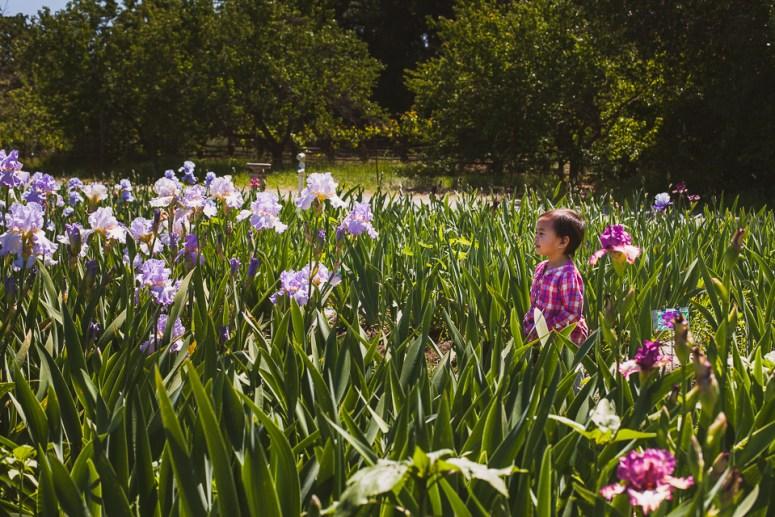 Pleasants Valley Iris Farm