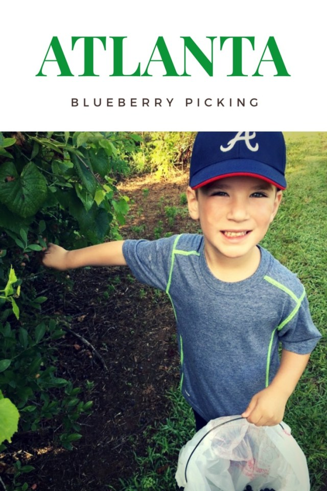 Blueberry Picking in Atlanta