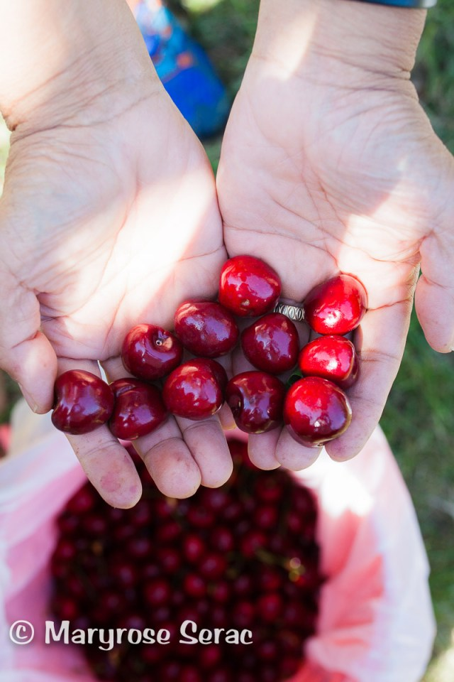 Cherry Picking in Northern California