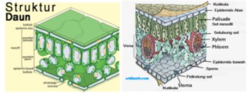 Berbagai Sistem dalam Kehidupan Tumbuhan Dilengkapi Gambar