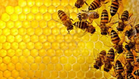 10 Fakta Unik Lebah Madu yang Perlu Anda Ketahui