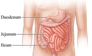 Struktur dan Fungsi Sistem Pencernaan Makanan pada Manusia Beserta Gambarnya
