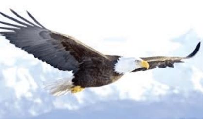 Percobaan Sains Sederhana Gaya Angkat pada Pesawat dan Burung