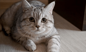Inilah Fakta Unik dan Menarik tentang Kucing Untuk Anda Ketahui