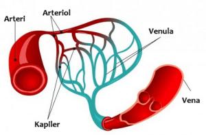 Hubungan Puasa dengan Kesehatan Dinding Pembuluh Darah