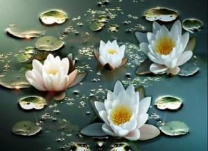 Fakta Unik tentang Keindahan Bunga Teratai Yang Wajib Anda Ketahui