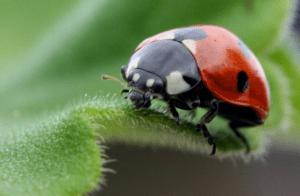 Fakta Unik dan Menarik Tentang Kumbang Yang Wajib Anda Baca