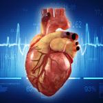 Fakta Unik Tentang Jantung Manusia Yang Wajib Anda Baca