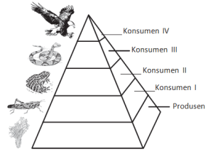 Ringkasan dan Latihan Soal UN IPA SMP MTs Materi Ekosistem