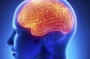 Inilah Fakta Unik Tentang Otak Manusia yang Perlu Anda Ketahui