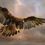 10 Fakta Unik dan Menarik Seputar Burung Elang Yang Wajib Anda Baca