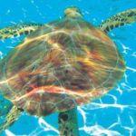 zakintos-kornjace