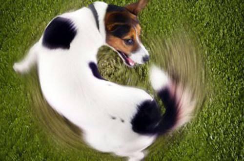 Il Cane Che Scodinzola Sta Comunicando Qualcosa Ecco Come