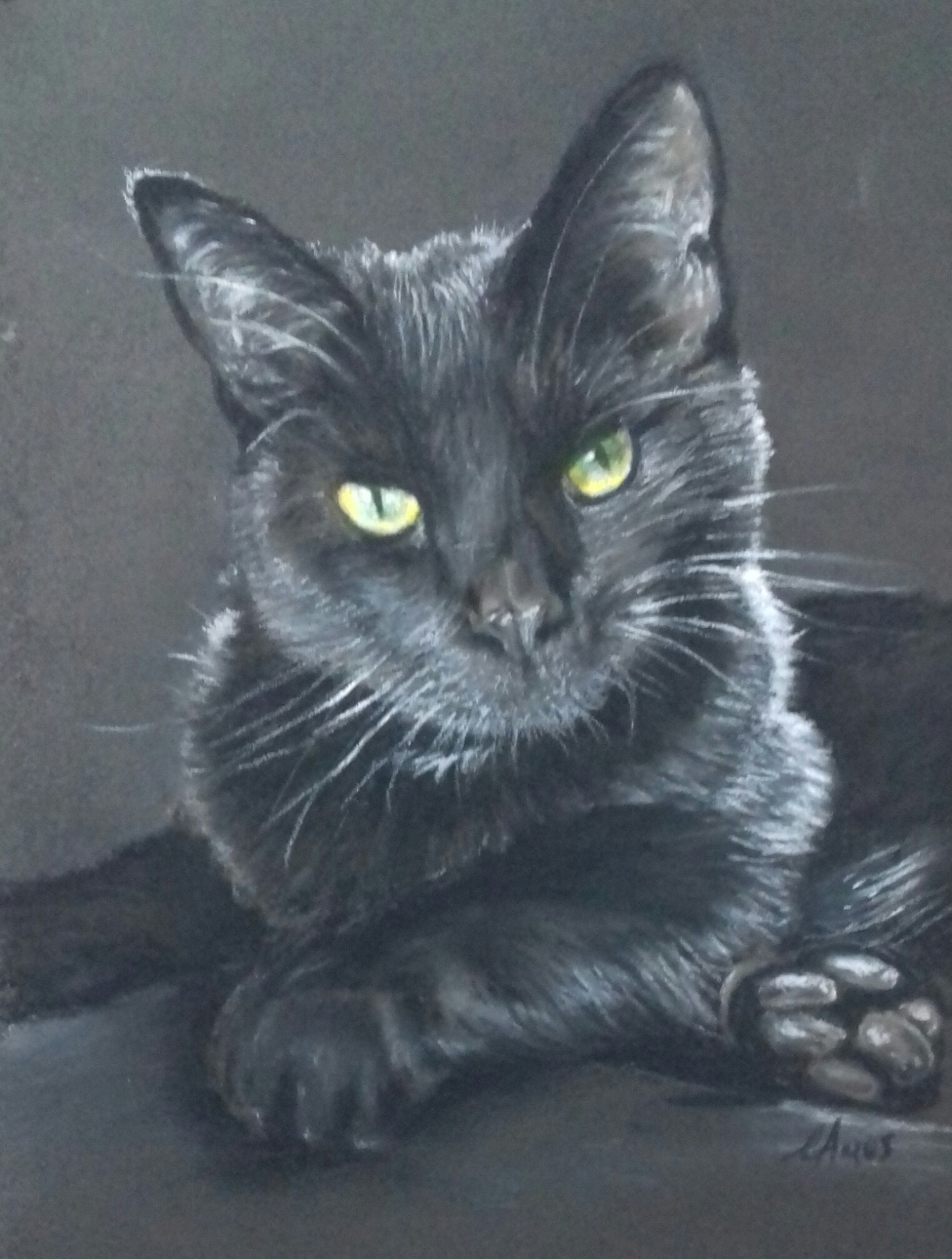 Black cat portrait - White pastel pencil