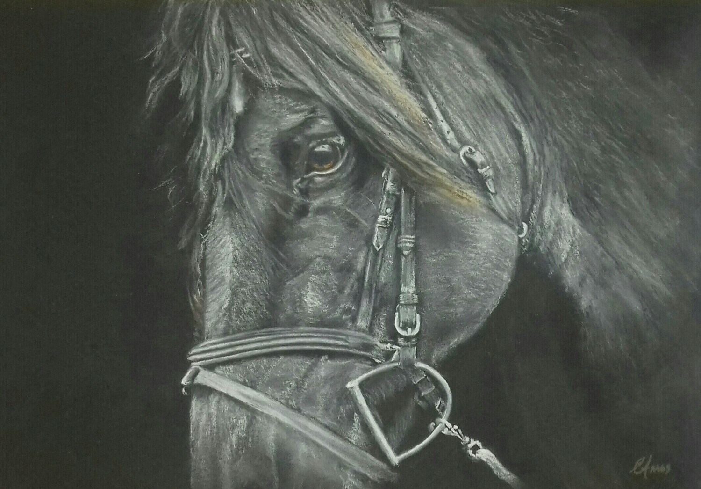 Stallion - Pastel pencils