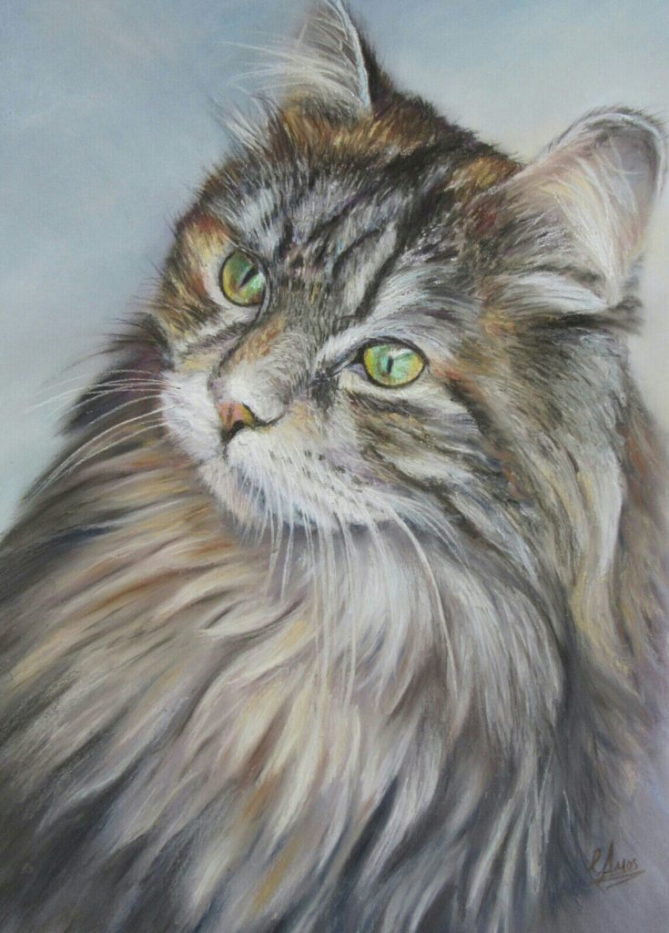 Maine Coon by Christopher Amos