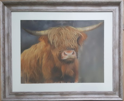 Highland coe painted in soft pastels