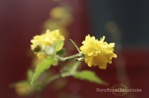 Yellow_Flower_CBPAssociate