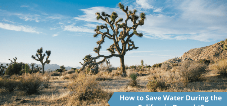 How to Save Water During the California Drought- Ampac USA