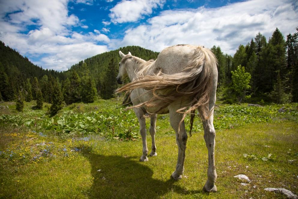 Cavallo nel pascolo di Nauleni