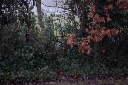 ilabaca in a bush