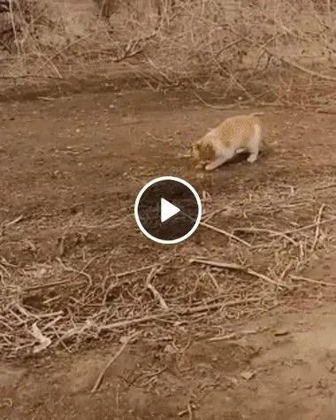 Gato selvagem Caçando Aves