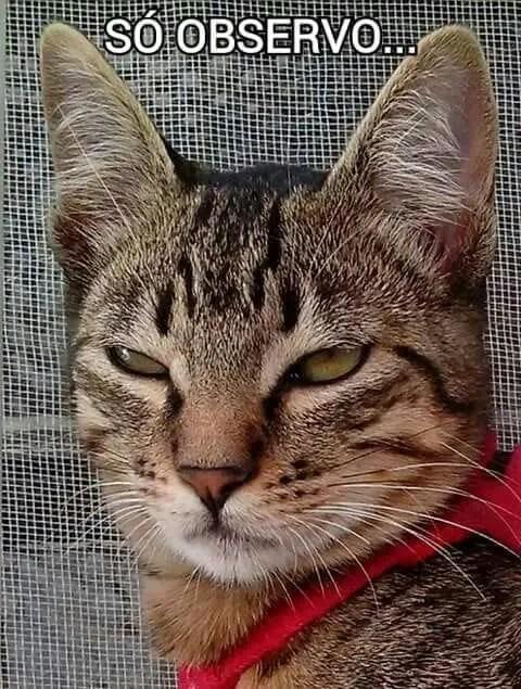 Só observando #gatosengraçados