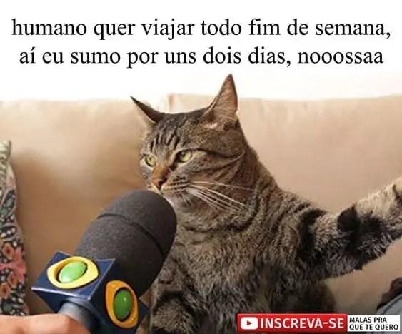 A história do gato