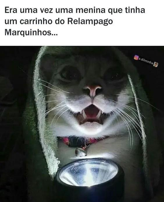 Imagens engraçadas de gatos