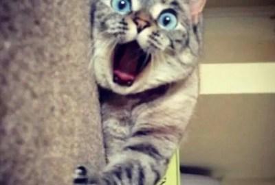 gatos fofos