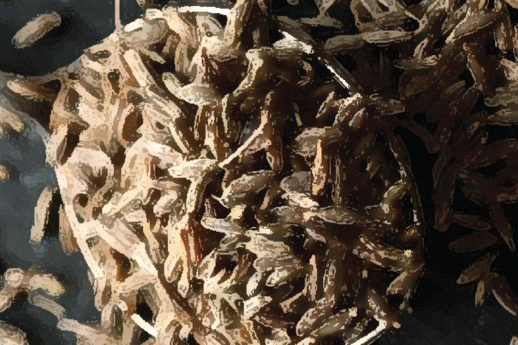 Amrutam Cumin Benefits1-07