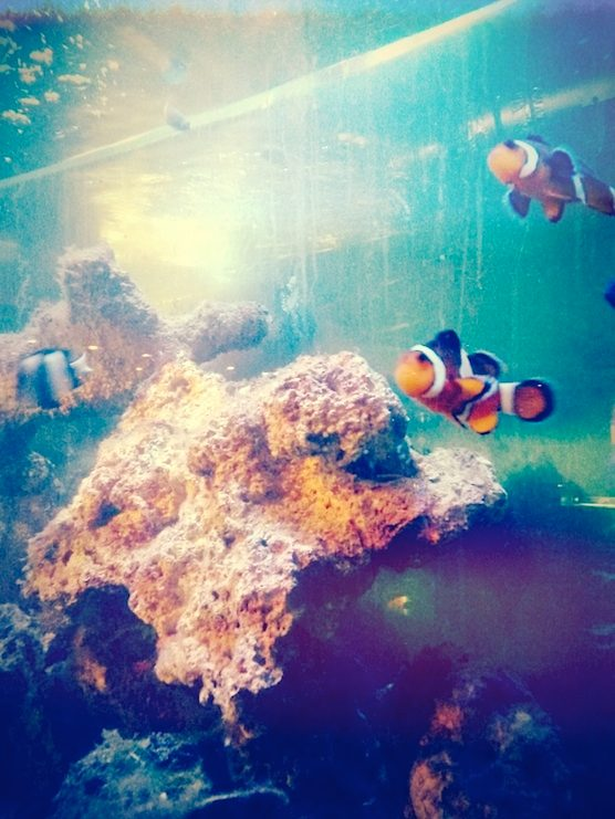 The fish tank in Amsterdam's coffeeshop Hunters