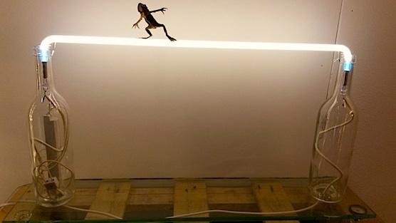 Art in Amsterdam: Frog on lamp
