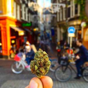 Amsterdam long-term effect of cannabis