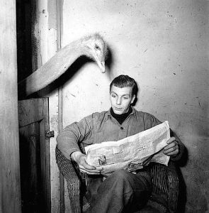 Amsterdam in Pictures: Artis The Zoo in 1951