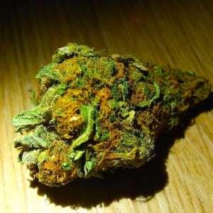 New Dutch Law on Cannabis