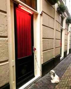 Red Light District Facebook Dog