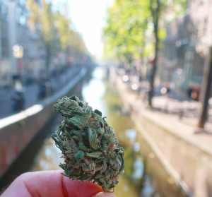 Joints in coffeeshops Amsterdam Red Light District