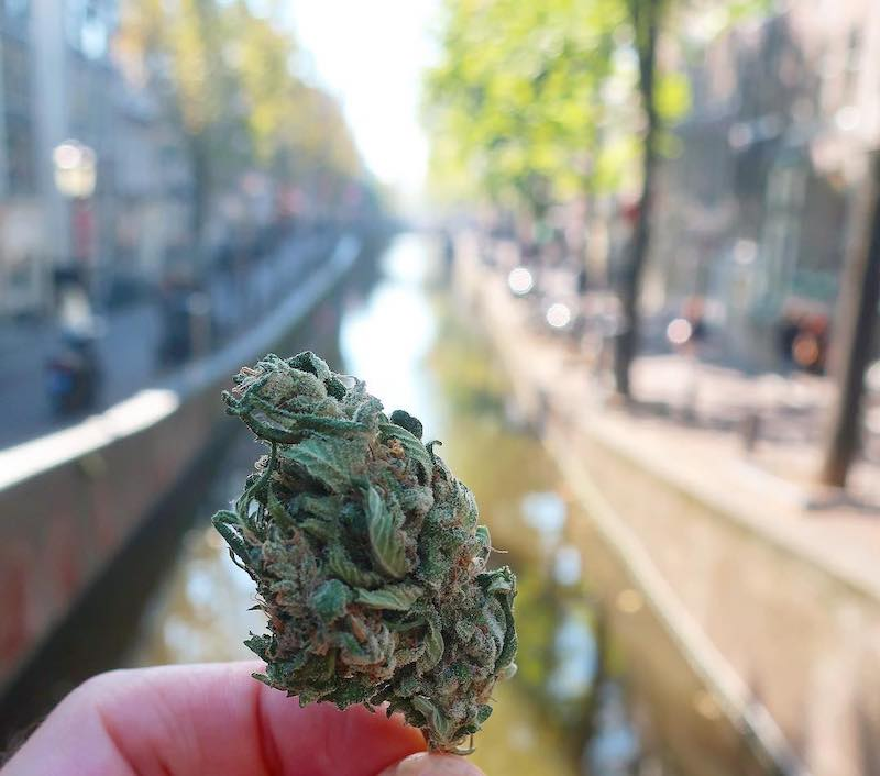 Drug use in the Netherlands weed THC