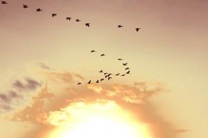 Image: Mindfulness, Flickr