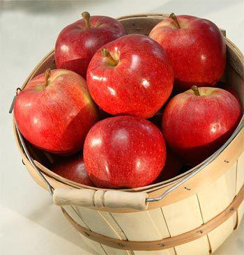 Food Challenge: Apples