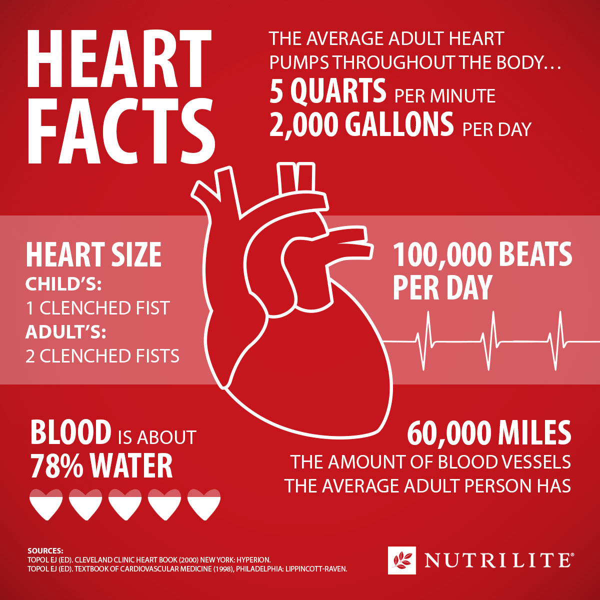 Facts About The Heart An Infographic