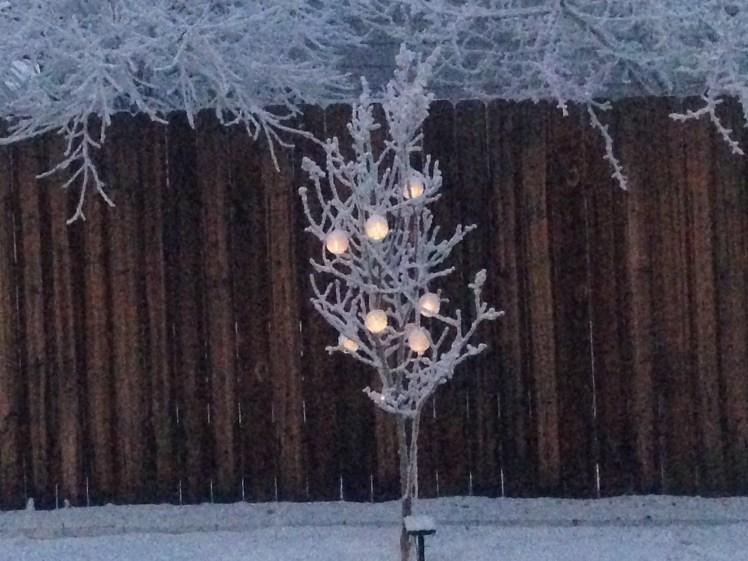 frosttree