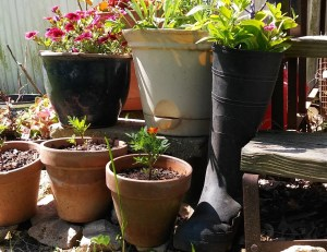 Unique containers for gardening.