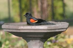 Attracting backyard birds.