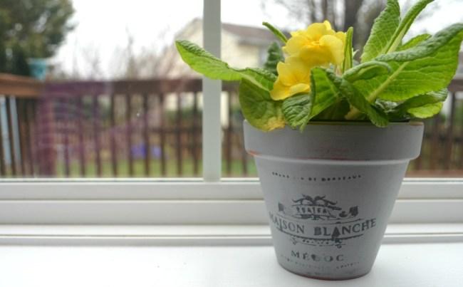 tampicoflowerpot