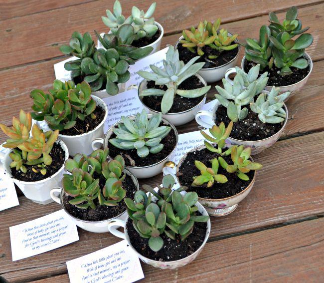 Teacup Succulent Party Favors