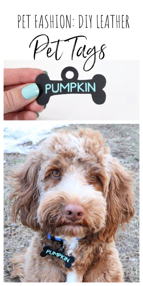 Pet Fashion: DIY Pet Tags